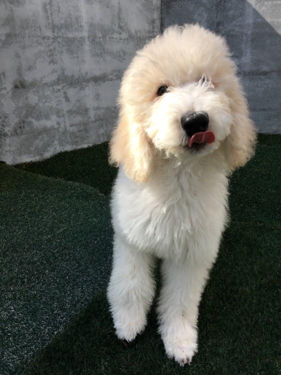 我が家の愛犬♪